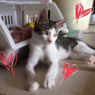 動画みて下さい‼️可愛い仔猫が里親さん待ってます。