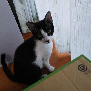 子猫 6ヶ月 里親募集