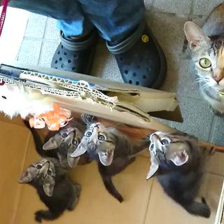 ✦ママ猫ちゃんと子猫ちゃん里親募集中✦10/27追記と写真更新しました