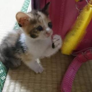 生後2ヶ月未満の子猫