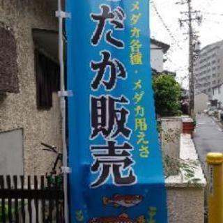 名古屋 趣味のメダカ販売 NMB