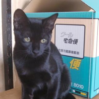 なみちゃん 4ヵ月の子猫(女の子)