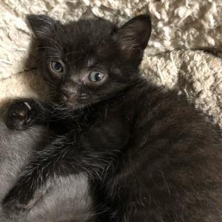 1匹の子猫ちゃん