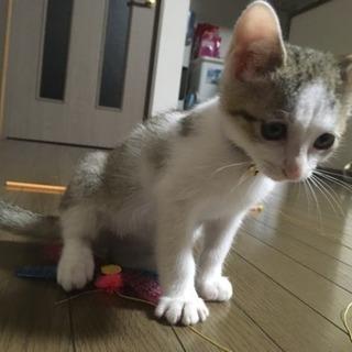 保護猫 オス2ヶ月 ワクチン接種済