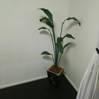 観葉植物 造花 全長140cm ブラック×ゴールド