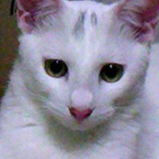 4ヶ月の元気な子猫達 ウイルス検査、ワクチン済