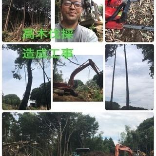 庭木伐採 高木伐採店 庭の手入れ ツチヤガーデンホーム(所沢市)