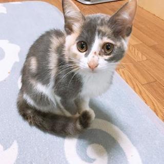 🐱可愛い~オス.メスの猫ちゃん🐱里親募集!