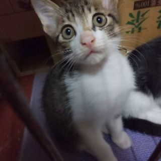 元気な子猫2ヶ月3匹