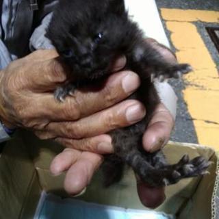 殺処分0社会を南区黒猫の赤ちゃん里親募集