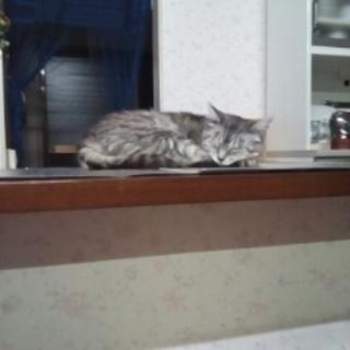 猫を見ませんか?(注意喚起ボランティア募集)