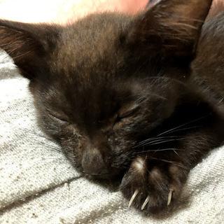 黒い子猫(生後約5ヶ月、男の子)