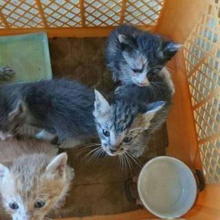 事故でお母さんを失った子猫四匹
