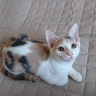 生後4カ月の可愛い三毛猫ちゃん