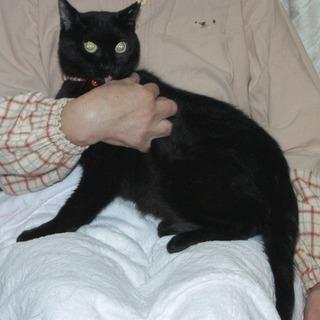 黒猫の女の子、クロちゃんです。