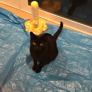 【黒猫】野良からの保護猫です