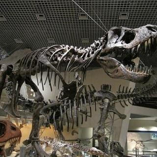 10月6日(土) ☆上野国立科学博物館で開催☆神秘的な化石と超リ...