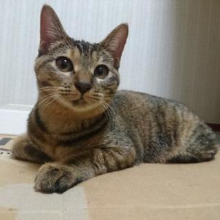 生後6ヶ月のむぎわら猫♀
