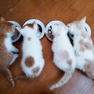 可愛いしかない子猫達(*^^*)