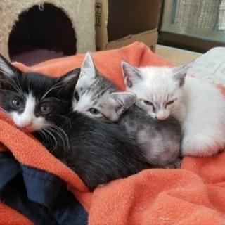 2ヶ月子猫 4匹!
