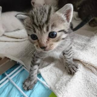 可愛い子猫×1匹(最初は七匹)の里親さんを募集しています