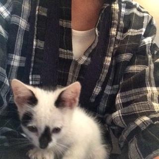 深谷市公園で子猫保護しました。1ヶ月半子猫