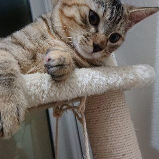 4か月くらいの子猫です(予防接種済...