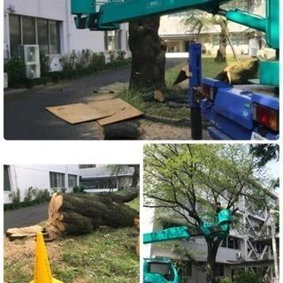 木の伐採 山林伐採抜根、庭の手入れ店【所沢市】