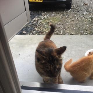 私の職場に出入りしているネコちゃん達です。