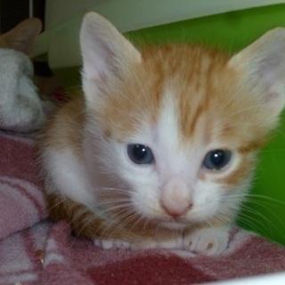 ぬいぐるみのような愛らしい赤ちゃん猫!