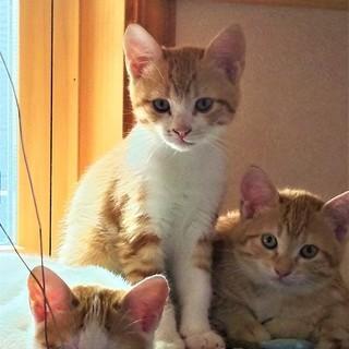7月29日生まれの子猫2匹(やさしい里親さん決定)