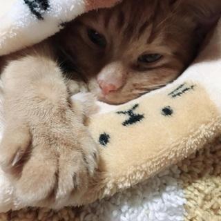 二匹の猫の里親募集してます!