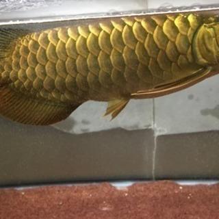 大型魚専門店 AQUASHOP 流星