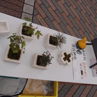 盆栽や和服など、日本文化を新しい形で作り上げたい仲間募集