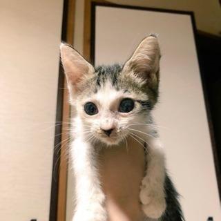キジ白猫ちゃん