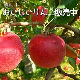 わけありりんご1kg150円より【特別栽培】