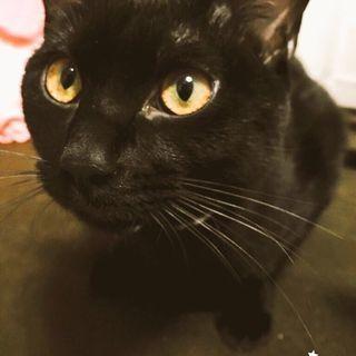 黒猫/男の子/2歳/2匹