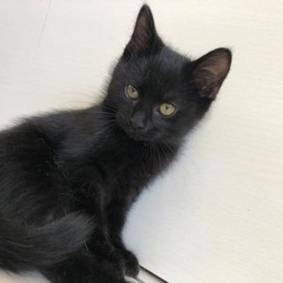可愛い黒猫くんを家族の一員として迎...