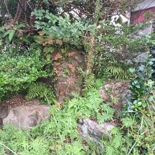 庭石 庭木 整理の為差し上げます