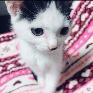甘えんぼの子猫です