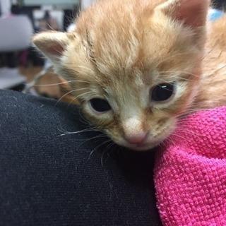 ミルクから育ててたい方里親募集!可愛い子猫います。