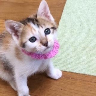 可愛い三毛猫ちゃんです❣️