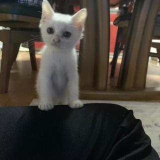 保護白い子猫ちゃん