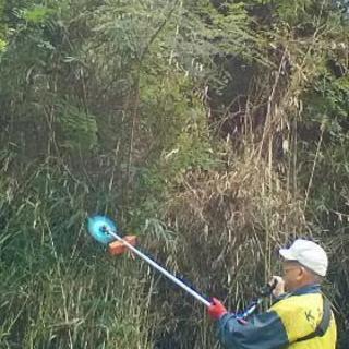 つる巻の繁り篠竹バリバリ刈り取り☺