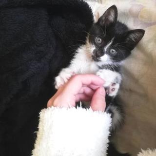 生後1ヶ月くらいの人懐っこい子猫の里親さん募集