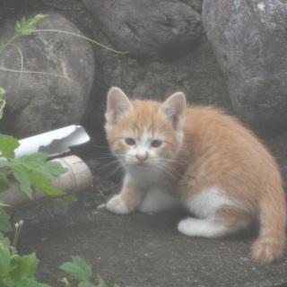 半野良猫の子猫です 生後1ヶ月半ぐらいです。可愛いです。 優しい方...