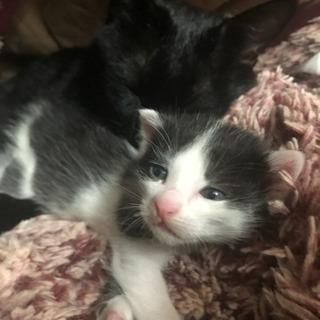 9月23日生まれの仔猫です。