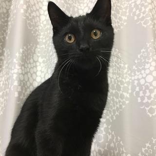 里親募集 黒猫 4ヶ月 オス(譲渡先決まりました)