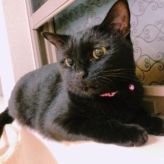 5歳 黒猫のクロちゃん