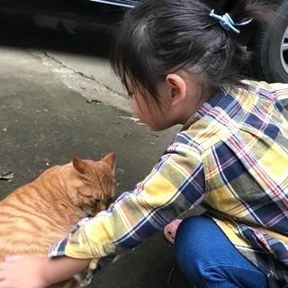 保護してます☆成猫です